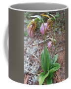 Three Lady Slippers Coffee Mug