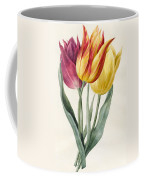 Three Lily Tulips  Coffee Mug