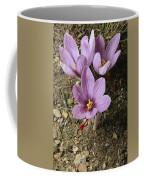Three Lovely Saffron Crocus Blossoms Coffee Mug