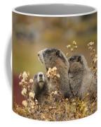 Three Marmots 2 Coffee Mug