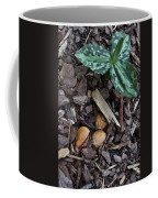 Three Nuts For A Trillium Coffee Mug