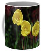 Three Pretty Blooming Yellow Tulips In A Garden Coffee Mug