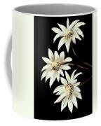 Three Spring Daisies Coffee Mug