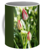 Three Striped Tulips Coffee Mug