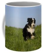 Tibetan Terrier Puppy Coffee Mug