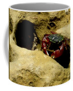 Tide Pool Crab 1 Coffee Mug