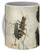 Tiger Beetle Looking For Prey On A Stone Coffee Mug