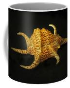 Tiger Conch Seashell Coffee Mug