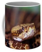 Timber Rattler Coil Coffee Mug