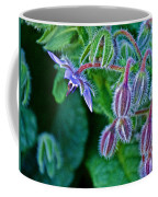 Tiny Blue Flower On A Bush At Pilgrim Place In Claremont-california  Coffee Mug