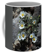 Tiny White Flowers In The Gravel Coffee Mug