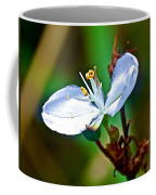 Tiny White Wildflower In Vicente Perez Rosales National Park Near Puerto Montt-chile  Coffee Mug