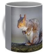 Tired Squirrel And Fly Coffee Mug