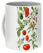 Tomatoes And Related Vegetables Coffee Mug