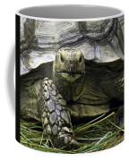 Tortoise's Stare Coffee Mug