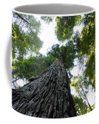 Towering California Redwood Trees Coffee Mug