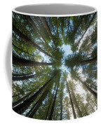Towering Fir Trees In Oregon Forest State Park Coffee Mug