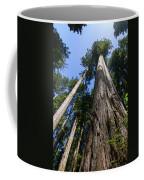 Towering Redwoods Coffee Mug