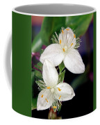 Tradescantia Flower Coffee Mug