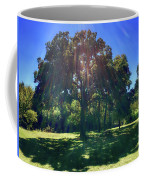 Tree Bathed In Sun Coffee Mug