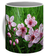 Tree Blossoms 4 Spring Flowers Art Prints Giclee Flower Blossoms Coffee Mug