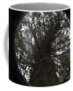 Tree In The Round Coffee Mug