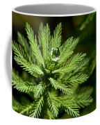 Tree Top Dew Drop Coffee Mug