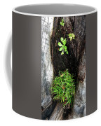Tree Trunk Still Life Coffee Mug
