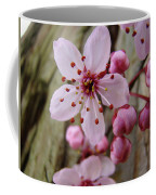 Trees Art Prints Canvas Pink Blossoms Spring Blue Sky Baslee Troutman Coffee Mug