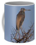 Tri Color Heron Coffee Mug