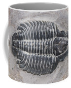 Trilobite Coffee Mug