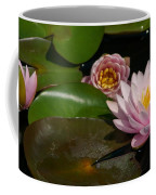 Trio Of Pink Lotus Waterlilies Coffee Mug