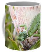 Trioceros Jacksonii - Jackson's Chameleon - Maui Hawaii Coffee Mug
