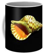 Triton Trumpet Seashell Cymatium Tritonis Coffee Mug