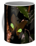 Tropical Buterfly Coffee Mug