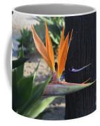 Tropical Garden Photo Of A Bird Of Paradise  Coffee Mug