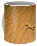 tufted ghost crab Ocypode cursor on sand Coffee Mug