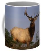 Tule Elk - Tomales Point Coffee Mug