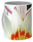 Tulip Flowers Art Prints 4 Spring White Tulip Flower Macro Floral Art Nature Coffee Mug