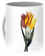 Tulip (tulipa Gesneriana) Coffee Mug