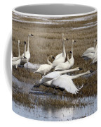 Tundra Swans Alberta Canada 3 Coffee Mug