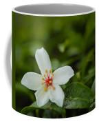 Tung Flower On Tea Tree Coffee Mug