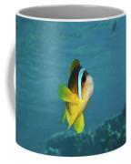 Two-banded Clownfish Coffee Mug