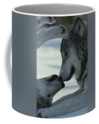 Two Gray Wolves, Canis Lupus, Touch Coffee Mug by Jim And Jamie Dutcher