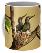 Two Hummingbird Babies In A Nest Coffee Mug