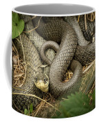 Two Intertwined Grass Snakes Lying In The Sun Coffee Mug
