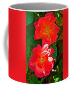 Two Joseph's Coat Roses At Pilgrim Place In Claremont-california Coffee Mug
