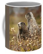Two Marmots Coffee Mug