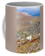 Two Mountain Goats On Mount Bierstadt In The Arapahoe National Fores Coffee Mug