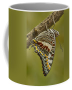 Two Tailed Pasha Butterfly Coffee Mug